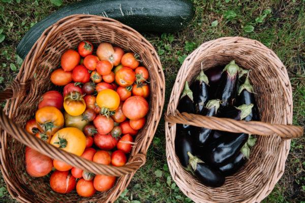 Fresh food baskets